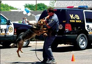 MCSO Sgt. Ron Weber plays the bad guy for Eiko during  a recent K-9 demonstration. MCSO/Courtesy