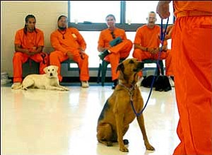 The seventh graduating class of animals trained by inmates will be Friday in a program coordinated by the Arizona State Prison-Kingman and Mutt Matchers.  JC AMBERLYN/Miner