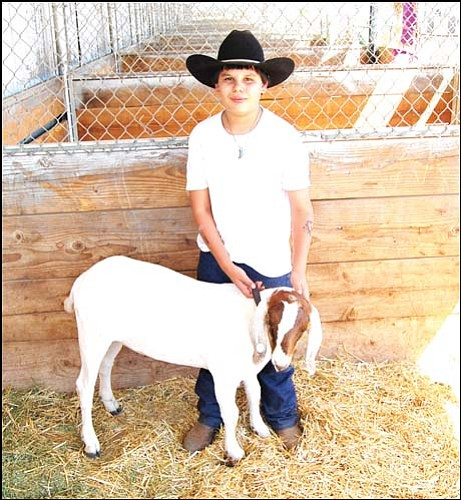 Kevin Kinnett, 12, stands with his goat Avalanche on Champions Row at the Mohave County Fair. Kinnett and Avalanche won Grand Champion Market Goat at Friday's judging. <br> SHAWN BYRNE/Miner