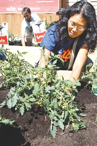 CANDACE WEST/Miami Herald, MCT<br><br> Maria Marasigan plants tomatoes during a garden party in Miami recently. More and more first-timers are getting their hands dirty with gardening as the economy continues to falter.