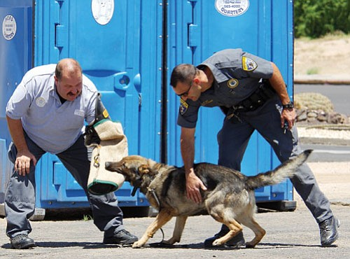 MCSO/courtesy<br><Br> Mohave County Sheriff's Sgt. John Wilson demonstrates a take-down by K-9 Ganto with his handler Deputy Raja Karim.