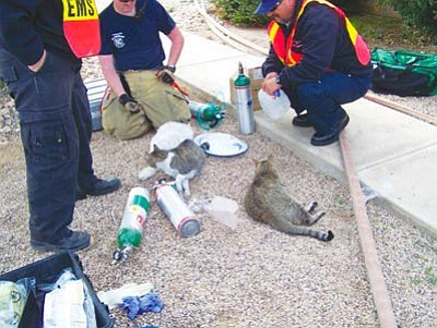 Courtesy Photo<br/>Firefighters use specialized equipment to revive several cats pulled from a burning home Wednesday.