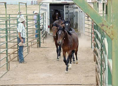 Courtesy -- The Bureau of Land Management will sell wild horses and burros this week at the Mohave County Fair.<br /><br /><!-- 1upcrlf2 --><br /><br /><!-- 1upcrlf2 -->