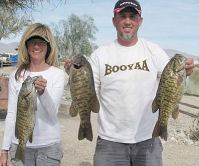 Courtesy<br /><br /><!-- 1upcrlf2 -->The team of Tina Kennedy and Shane Moline are one of the hottest teams of bass anglers in the Kingman area. Here the pair show some of the fish that helped them win the March Kingman Bass Club tournament at Lake Havasu. Their five-fish limit weighed almost 20 pounds.<br /><br /><!-- 1upcrlf2 --><br /><br /><!-- 1upcrlf2 -->