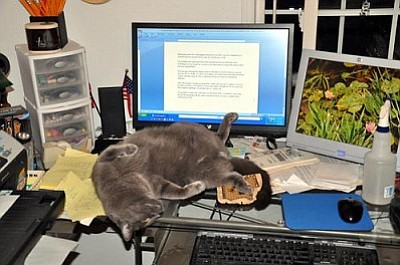 Hooch loves to hang out with me in front of the computer. He believes he is helping when he reaches over with his paw and clicks the mouse to the computer and causes complete paragraphs to dissapear.