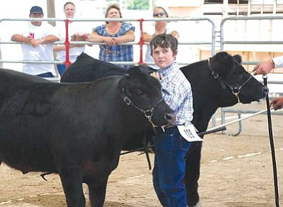 Courtesy<br /><br /><!-- 1upcrlf2 -->As the adults look on, the children will strut their animals' stuff this weekend at the SAILA Junior Livestock Show at the Mohave County Fairgrounds. Logan Dollarhide is shown at last year's competition.