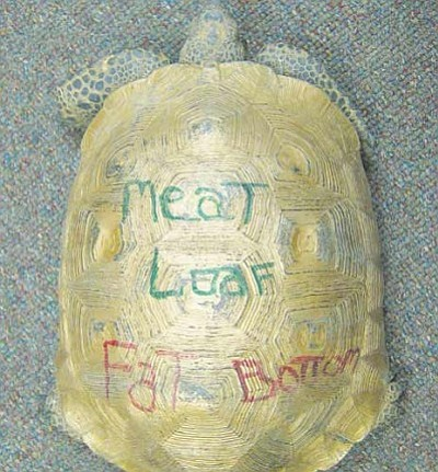 Courtesy<br /><br /><!-- 1upcrlf2 -->Game and Fish personnel said a tortoise whose shell was covered in paint could have been poisoned from the toxins absorbed through its shell.<br /><br /><!-- 1upcrlf2 --><br /><br /><!-- 1upcrlf2 -->