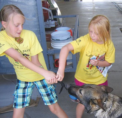 AHRON SHERMAN/Miner<br /><br /><!-- 1upcrlf2 -->Lex, a 5-year-old, 75-pound Dutch Shepherd with the Hualapai Tribal Police Department plays tug-o-war with two kids from the Summer Fun Daze program.