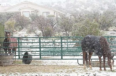 JC AMBERLYN/Miner<br /><br /><!-- 1upcrlf2 -->It rained and snowed in the Kingman area Thursday. Here, two horses wear blankets Thursday to help protect them from the cold as it snows at a house in the Lazy Y-U Ranch in the Hualapai Mountain foothills.