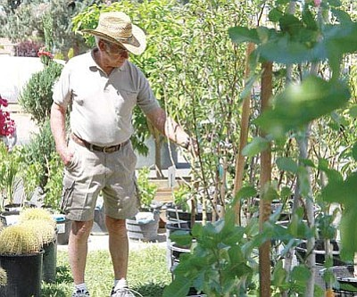 Bill Adas looks at fruit trees for sale by Desert Garden Center Saturday.