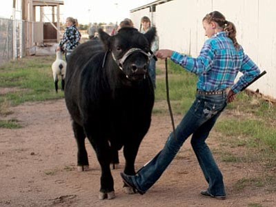 Warren Adams-Ockrassa/Courtesy<br> Serena Parker from the Outlaws 4-H Club works with her steer.