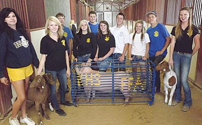 AHRON SHERMAN/Miner<br>Several members of the Kingman High Future Farmers of America, who will all be showing animals at the fair, pose with a rambunctious pig and three goats – two stubborn ones and, at right, a well-behaved one named Rowdy. From left to right are Sarah Neal, Kendra Hixson, Dominic Lynch, Skylynn Knutz, Matthew Valdez, Alyssa Long, Lukas Ortiz, Carly Lawrence, Logan Williams and Haley Finch.