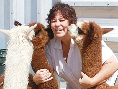 JC AMBERLYN/Miner<br /><br /><!-- 1upcrlf2 -->Local ranchers Ron and Anna Nyberg of Alpacas of the Southwest are inviting the public for a free tour of their ranch Sept. 28-30 during National Alpaca Farm Days. Above: Anna Nyberg plays with, from left, Teddy, Hershey and Abbey.