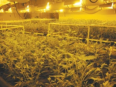 A tip led Mohave County law enforcement officers to a house on South Concho Road, where a large marijuana-growing operation was found.<BR>MCSO/Courtesy