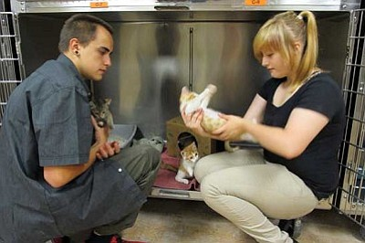 KIM STEELE/Miner<br /><br /><!-- 1upcrlf2 -->Drake Price, left, and Gypsy Patterson socialize a litter of kittens at the Western Arizona Humane Society in Kingman while working for the Coalition Youth Team, or COYOTE. The kittens and many other animals are available for adoption.