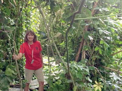 Trekking through the rain forest biome was a favorite activity for Barbara McLarty.  Plants from high up in the canopy send roots down to the ground. Even though it was hot and humid, she enjoyed this biome. (Courtesy)