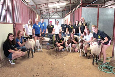 Kingman High School FFA students stand with their animals as they prepare them for the livestock auction during the Mohave County Fair. From left are Lydia Ewing, Haley Finch, Carly Lawrence, Makayla Newberry, Mathew Valdez, Darrian Pennington, Kevin Kinnett, Kendra Hixson, Skylinn Knutz, Alyssa Long, Madelynn Uhl-Miller, Paige Prentice, McKayla White, Hannah Uhl-Miller and Cheyenne Bleekman. Not shown: Nadia Lynch, Kyle Kemp, Roxanne Hoyt and  Colin Crowder.<br /><br /><!-- 1upcrlf2 -->