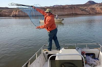 DON MARTIN/Special to the Miner<BR> Johnnie Hoeft demonstrates the correct technique to use when casting a net to catch gizzard shad on Lake Mead.