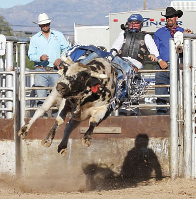 Will Rogers rides a bull in the 29th Annual Andy Devine Days Rodeo at the Mohave County Fairgrounds. (JC AMBERLYN/Miner)