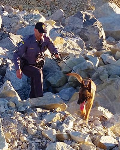 Courtesy<BR> Ecko and his handler search for suspected thieves near Mineral Park Mine in June. Ecko tracked down a Kingman man who was hiding amid the boulders that day. Last week, Ecko was injured when a suspected car thief bludgeoned the K9 with a rock in an attempt to avoid arrest.
