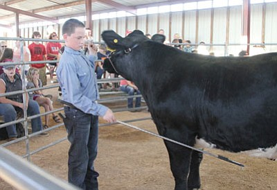 Zane Campbell, 13, shows Oreo, his steer, during a Junior Steer Showmanship contest at a pre-fair livestock handling practice event at the Mohave County Fairgrounds on Aug. 22. (JC AMBERLYN/Miner)