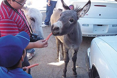 Some burros are well-fed by tourists in Oatman, but ones in the wild compete with other animals for resources. (ALAN CHOATE/Miner)