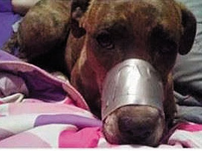 A woman who may have thought a photo of her duct-taped dog's muzzle would get a laugh learned instead it would get her investigated. (Courtesy)