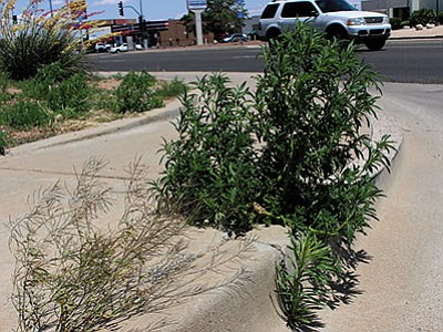 Weeds are actively growing in the city. Who is responsible for keeping them at bay on personal and public property? The answer might surprise you. The weeds on this corner have been cleared since this photo was taken. (DOUG McMURDO/Miner)