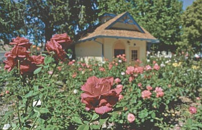 The rose garden is one of the many features at the Sharlot Hall Museum in downtown Prescott.