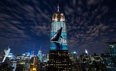 """A scene from """"Racing Extinction."""" (Courtesy photo)"""