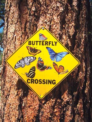 <i>Photo by Stan Bindell/NHO</i><br> Butterfly sign