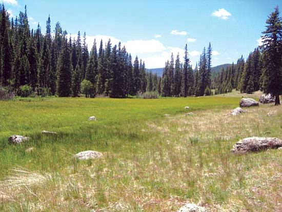 <i>Stan Bindell/NHO</i><br> A mountain meadow surrounded by spruce trees.