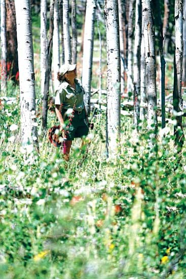 <i>Ecological Restoration Institute/NAU</i><br> Forest Service Southwest Region Plant Pathologist Mary Lou Fairweather surveys a stand of aspen that is fenced and protected from browsing animals. This grove near Williams shows a diversity of plants and young aspen suckers growing under the older trees.
