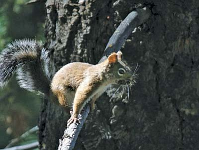 <i>Photo by Lisa Viotti</i><br> Squirrels frequent the wildlife trail.