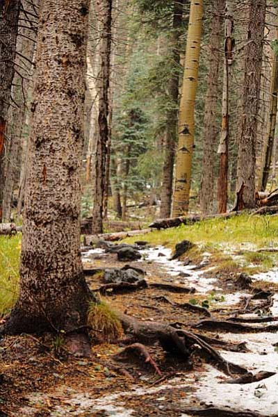 <i>Lisa Viotti/NHO</i><br> Many types of trees, such as fir, spruce and aspen, are visible while hiking along the trail.