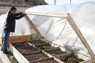 Submitted Photo<br> NTC Culinary Arts student Geraldine Coan of Crownpoint, N.M. tends to one of NTC's three current hoop houses. A hoop house is a green house with a plastic roof wrapped over flexible piping.