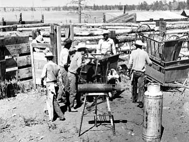 Cowboys brand cattle at the Bar T Bar's Hay Lake Ranch near Happy Jack, circa 1950s. <i>Photo/Old Trails Museum</i>