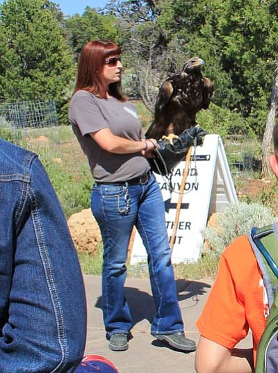 An employee with the Arizona Game and Fish Department of Wildlife Education Adobe Mountain<br /><br /><!-- 1upcrlf2 -->Wildlife Center shows a golden eagle to the public at Celebrate Wildlife Day May 19 at the Grand Canyon Visitor Center. NPS photo/Erin Whittaker