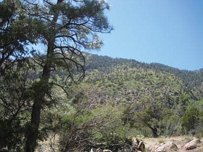 Mt. Elden offers plenty of trees and scenic views.