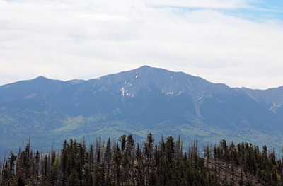 The San Francisco Peaks as seen from Kendrick Trail. The peaks are about 2,000 feet higher than Kendrick Mountain, but when on Kendrick it appears the mountains are the same height. Photo/Stan Bindell
