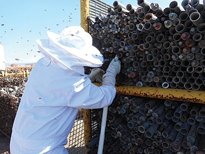 Page beekeeper Tom Geiger gently vacuums remaining bees from a pipe rack at the Navajo Generating Station. Photo/Pam Brown