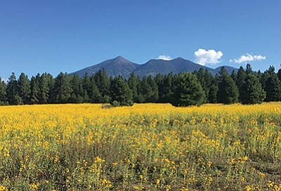 The San Francisco Peaks are sacred to many Native American tribes in the area. A lawsuit brought by the Hopi Tribe over reclaimed water on the Peaks was dismissed Aug. 13. Katherine Locke/NHO