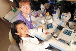 Photo by Jerry Foreman Northern Arizona University biochemist Diane Stearns, top, working with student researchers like Hertha Woody, has discovered that uranium damages DNA as a heavy metal, independent of its radioactive properties.