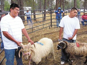 S.J. Wilson/Observer Jay Begay, left, took first and second place in the Yearling Ram category at the Navajo Churro Sheep Association show on Saturday. His first place ram is named Johnny. Stephen Bizahaloni shows his second place ram, Juan.Ó