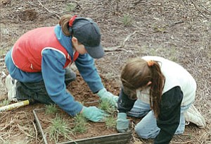 Students harvesting grasses (Courtesy photo).