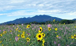 A colorful summertime view of the sacred San Francisco Peaks (Photo by Gary Elthie/NHO).