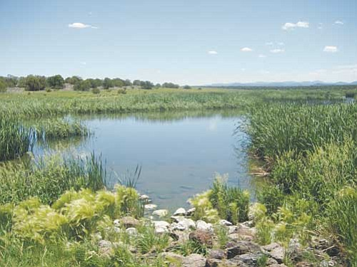 A serene view of Allen Severson Memorial Wildlife Area, also known as Pintail Lake, located near Show Low.