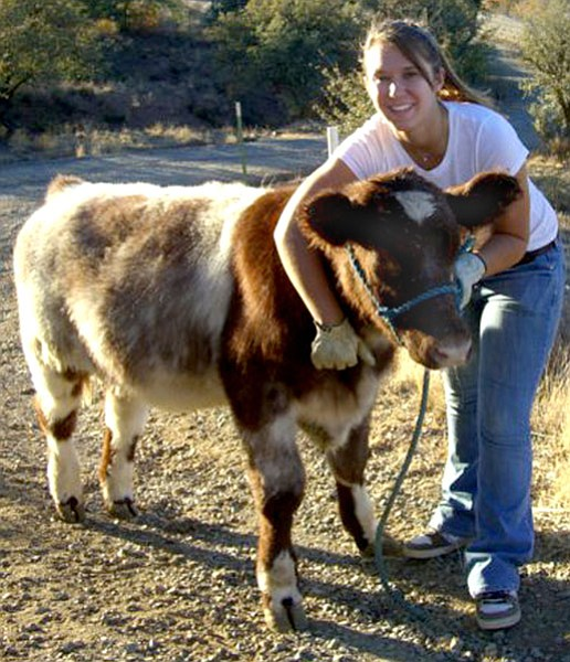Courtesy Photo<br> Katherine Alder, 17, acquired young Scooter when the steer weighed only 424 pounds.