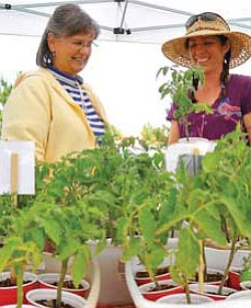 Sunshine Reilly owner of Burnin' Daylight Farm in Chino Valley, talks with Jean LeFever about her tomato plants Tuesday afternoon during the first day of the Prescott Valley Farmers Market.<br /><br /><!-- 1upcrlf2 -->Matt Hinshaw/The Daily Courier