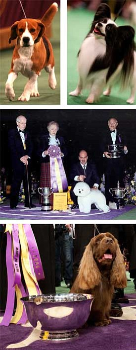 Photos courtesy Westminster Kennel Club<br>Some of my favorite Best in Show winners from the past decade. Clockwise from top: Beagle, 2008; Papillon, 1999; Bichon Frise, 2001; and Sussex Spaniel, 2009.